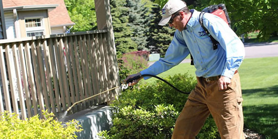 Residential Pest Control in Plymouth, MN