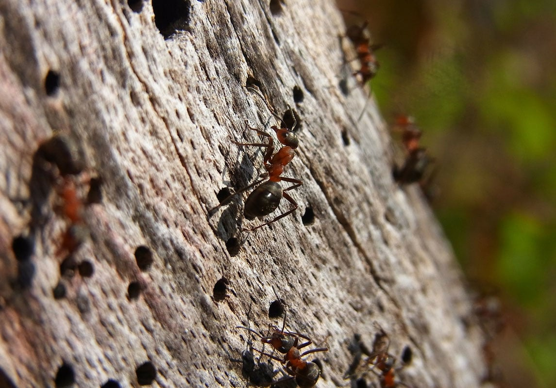 Residential Pest Control in Shoreview, MN