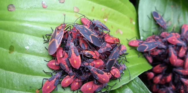 Pest Control in Stillwater, MN