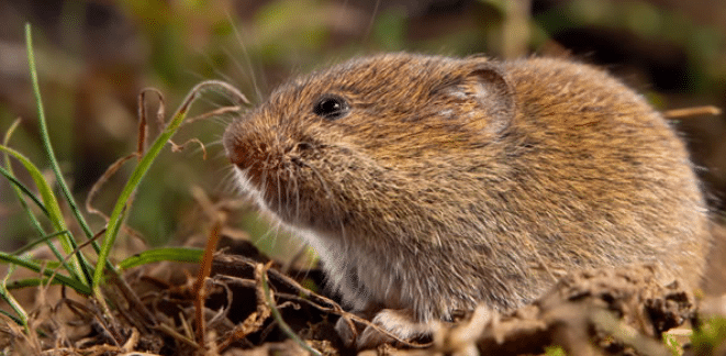 The Best Pest Control services in Elk River, MN