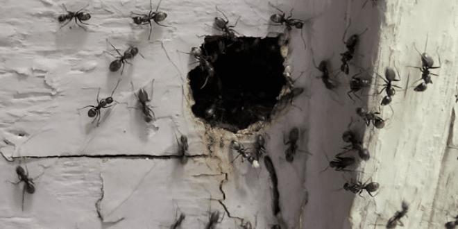 Pest Control in Champlin, MN