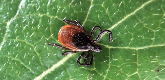 Pest Control in Orono, MN