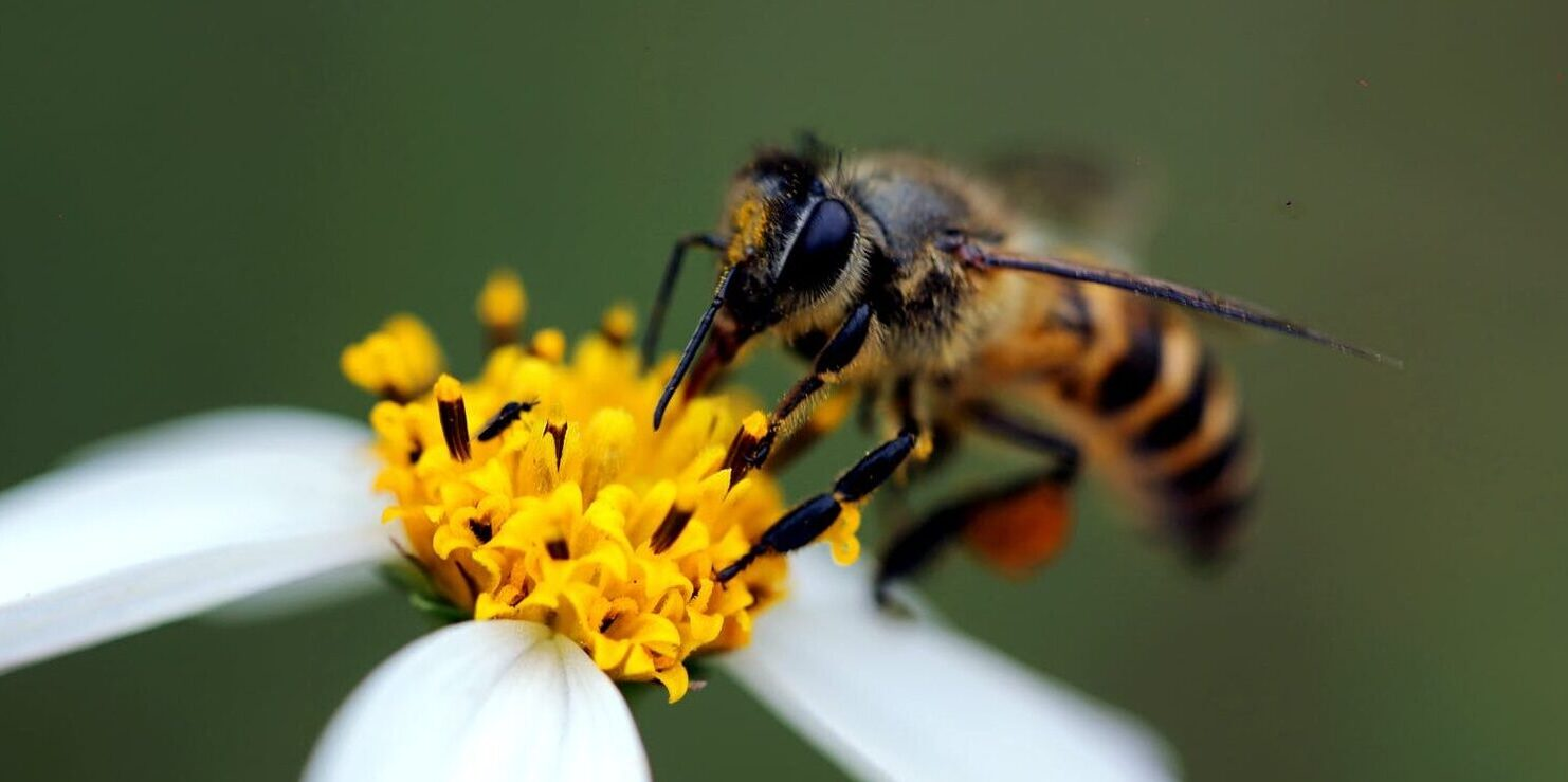Bee exterminator in Wayzata, MN